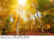 Купить «Trees with golden leaves in autumn and sunrays.Colorful autumn background.», фото № 33072676, снято 9 апреля 2020 г. (c) easy Fotostock / Фотобанк Лори