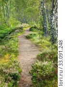 Купить «Footpath in the birch forest, Craigellachie Nationwide Nature reserve, Scotland», фото № 33091248, снято 7 апреля 2020 г. (c) age Fotostock / Фотобанк Лори