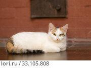 Купить «Portrait of a cat», фото № 33105808, снято 7 февраля 2020 г. (c) Argument / Фотобанк Лори