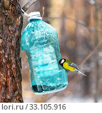 Купить «Птица Большая синица сидит в кормушке, сделанной из пластиковой бутылки, в зимнем лесу. Западная Сибирь, Россия», фото № 33105916, снято 15 февраля 2020 г. (c) Евгений Мухортов / Фотобанк Лори