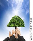 Купить «hands of business people holding green old tree», фото № 33112388, снято 29 февраля 2020 г. (c) PantherMedia / Фотобанк Лори