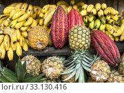 Купить «Cocoa fruit surrounded by other tropical fruits on the counter of the Latin America street market, Ecuador», фото № 33130416, снято 8 апреля 2020 г. (c) PantherMedia / Фотобанк Лори