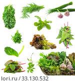 Купить «Collection of fresh herbs necessary on the each kitchen», фото № 33130532, снято 8 апреля 2020 г. (c) PantherMedia / Фотобанк Лори