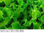 Купить «Photo of a delicious fresh green salad pattern background», фото № 33139456, снято 19 февраля 2020 г. (c) easy Fotostock / Фотобанк Лори