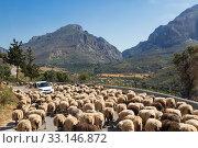 Купить «Car on a mountain road surrounded by a herd of sheep.  Crete, Greece», фото № 33146872, снято 6 июня 2017 г. (c) Наталья Волкова / Фотобанк Лори