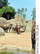 Купить «African elephant in natural environment.», фото № 33150264, снято 21 февраля 2020 г. (c) PantherMedia / Фотобанк Лори