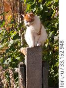 Кошка сидит на столбе. Стоковое фото, фотограф Анатолий Гуреев / Фотобанк Лори