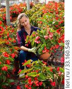 Female florist cultivating Begonia Semperflorens. Стоковое фото, фотограф Яков Филимонов / Фотобанк Лори
