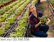 Positive woman engaged in cultivation portulaca. Стоковое фото, фотограф Яков Филимонов / Фотобанк Лори