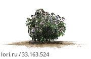 azalea in flower - isolated on white background. Стоковое фото, фотограф Gudrun Best / PantherMedia / Фотобанк Лори
