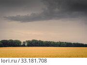 Купить «Golden field in dark cloudy weather», фото № 33181708, снято 31 мая 2020 г. (c) PantherMedia / Фотобанк Лори