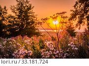 Купить «Sunrise over a meadow», фото № 33181724, снято 31 мая 2020 г. (c) PantherMedia / Фотобанк Лори