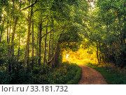 Купить «Road in a forest an early morning», фото № 33181732, снято 31 мая 2020 г. (c) PantherMedia / Фотобанк Лори
