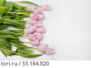 Bouquet of pink tulips with drops of water on a white isolated background. Стоковое фото, фотограф Светлана Валуйская / Фотобанк Лори