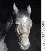 Pferd; Pferdekopf; Stall; Стоковое фото, фотограф Manfred Ruckszio / PantherMedia / Фотобанк Лори