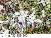 Купить «grass and fallen leaves on meadow under first snow», фото № 33189860, снято 27 мая 2020 г. (c) PantherMedia / Фотобанк Лори