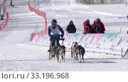 Купить «Boy mushing sled dog team, running on distance Sled Dog Race Competitions», видеоролик № 33196968, снято 20 февраля 2020 г. (c) А. А. Пирагис / Фотобанк Лори