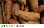 Купить «Raw sweet potato tubers for sale on market counter. Vegetarian food concept», видеоролик № 33198360, снято 14 ноября 2019 г. (c) Яков Филимонов / Фотобанк Лори