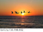 Купить «A flock of swans flies over the sea against the sunset sky», фото № 33198932, снято 25 января 2020 г. (c) Наталья Волкова / Фотобанк Лори
