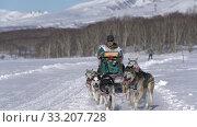 Male mushing sled dog team, running snow distance Sled Dog Racing Championship. Редакционное видео, видеограф А. А. Пирагис / Фотобанк Лори