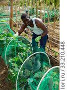 Купить «African farmer near beds with cabbage», фото № 33210448, снято 16 июля 2020 г. (c) Яков Филимонов / Фотобанк Лори