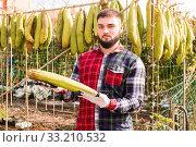 Купить «Worker cleans dried luffa in the backyard», фото № 33210532, снято 29 октября 2019 г. (c) Яков Филимонов / Фотобанк Лори