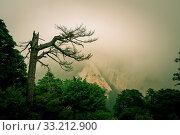 Купить «Covered in fog, mist and low clouds, mountain trail path leading to the summit of a South Peak on Huashan mountain, Shaanxi Province, China», фото № 33212900, снято 7 июня 2020 г. (c) easy Fotostock / Фотобанк Лори