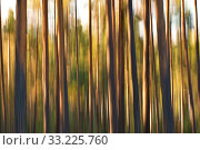 A pine forest is basking i the light of the sinking sun at sunset - motion blur. Стоковое фото, фотограф Kunst & Scheidulin / age Fotostock / Фотобанк Лори
