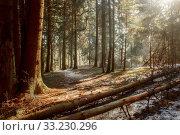 Купить «Frosty november landscape», фото № 33230296, снято 21 февраля 2020 г. (c) Julia Shepeleva / Фотобанк Лори