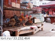 Купить «China, Heihe, July 2019: selling live chicken and roosters at a street market in Heihe in the summer», фото № 33232464, снято 12 июля 2019 г. (c) Катерина Белякина / Фотобанк Лори