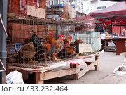 Купить «China, Heihe, July 2019: selling live chicken and roosters at a street market in Heihe in the summer», фото № 33232464, снято 12 июля 2019 г. (c) Катерина Белякина / Фотобанк Лори