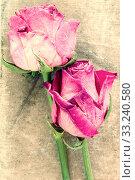 Купить «Two old roses on dirty canvas», фото № 33240580, снято 29 февраля 2020 г. (c) PantherMedia / Фотобанк Лори