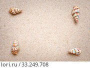Купить «Sea shells frame on sand.», фото № 33249708, снято 29 февраля 2020 г. (c) PantherMedia / Фотобанк Лори