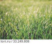 Купить «Water drops on grass», фото № 33249808, снято 29 февраля 2020 г. (c) PantherMedia / Фотобанк Лори