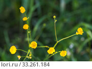 Купить «Wild yellow flowers over blurred green background», фото № 33261184, снято 14 июля 2018 г. (c) EugeneSergeev / Фотобанк Лори