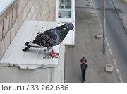 Купить «Голубь сидит на наружном блоке кондиционера, установленного на стене жилого дома», фото № 33262636, снято 22 июня 2019 г. (c) Илюхина Наталья / Фотобанк Лори