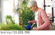 Купить «senior woman watering houseplants at home», видеоролик № 33285788, снято 19 января 2020 г. (c) Syda Productions / Фотобанк Лори