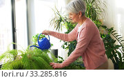 senior woman watering houseplants at home. Стоковое видео, видеограф Syda Productions / Фотобанк Лори