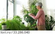 Купить «happy senior woman cleaning houseplant», видеоролик № 33286040, снято 19 января 2020 г. (c) Syda Productions / Фотобанк Лори