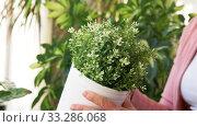 senior woman takes care of houseplants at home. Стоковое видео, видеограф Syda Productions / Фотобанк Лори