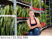 Young female florist in apron showing plant of Sansevieria Laurenti. Стоковое фото, фотограф Яков Филимонов / Фотобанк Лори
