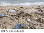 Купить «Dead young dolphin is washed up on the shore surrounded by plastic bottles, bags and rubbish thrown in the sea, on background a Black Sea. Plastic pollution killing marine animals.», фото № 33308308, снято 2 марта 2020 г. (c) Некрасов Андрей / Фотобанк Лори