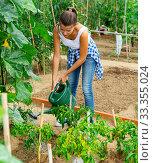 Купить «Woman watering peppers seedlings with watering pot in greenhouse», фото № 33355024, снято 14 августа 2019 г. (c) Яков Филимонов / Фотобанк Лори