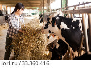 Купить «Female technician feeding cows with grass and smile in livestock barn», фото № 33360416, снято 29 мая 2019 г. (c) Яков Филимонов / Фотобанк Лори