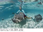 Купить «Snorkeling with Pink Whipray in Lagoon, Pateobatis fai, Moorea, French Polynesia.», фото № 33381232, снято 29 августа 2019 г. (c) age Fotostock / Фотобанк Лори