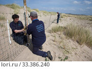RSPB and Denbighshire County Council Staff putting up fencing to protect Little terns (Sterna albifrons) nesting on beach, Denbighshire, Wales, UK. Стоковое фото, фотограф David  Woodfall / Nature Picture Library / Фотобанк Лори
