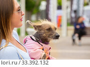 Купить «Russia, Samara, June 2019: a small shaggy dog in overalls in the arms of a beautiful mistress.», фото № 33392132, снято 18 мая 2019 г. (c) Акиньшин Владимир / Фотобанк Лори
