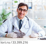 Vet doctor checking up rabbit in his clinic. Стоковое фото, фотограф Elnur / Фотобанк Лори