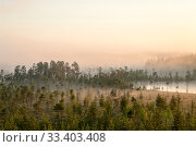 Sunrise in evergreen forest with bog, haze over water and land, northern Karelia, Russia. Стоковое фото, фотограф Кекяляйнен Андрей / Фотобанк Лори