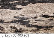Купить «Old weathered wooden board with black spots», фото № 33403908, снято 7 марта 2020 г. (c) EugeneSergeev / Фотобанк Лори